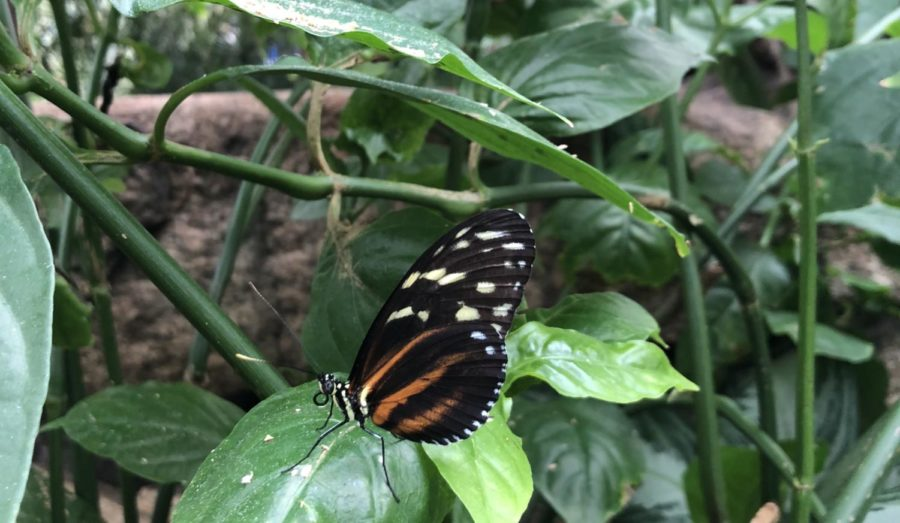 A butterfly chills on a leaf peacefully.