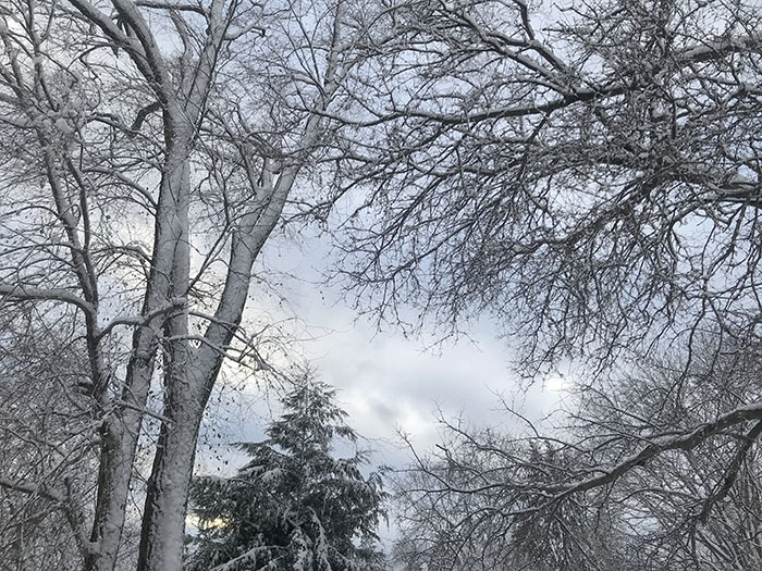 Snow+covered+trees