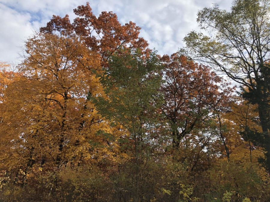 Despite the fun family relations at Thanksgiving dinner, there are many things to be thankful for, such as beautiful fall scenery.