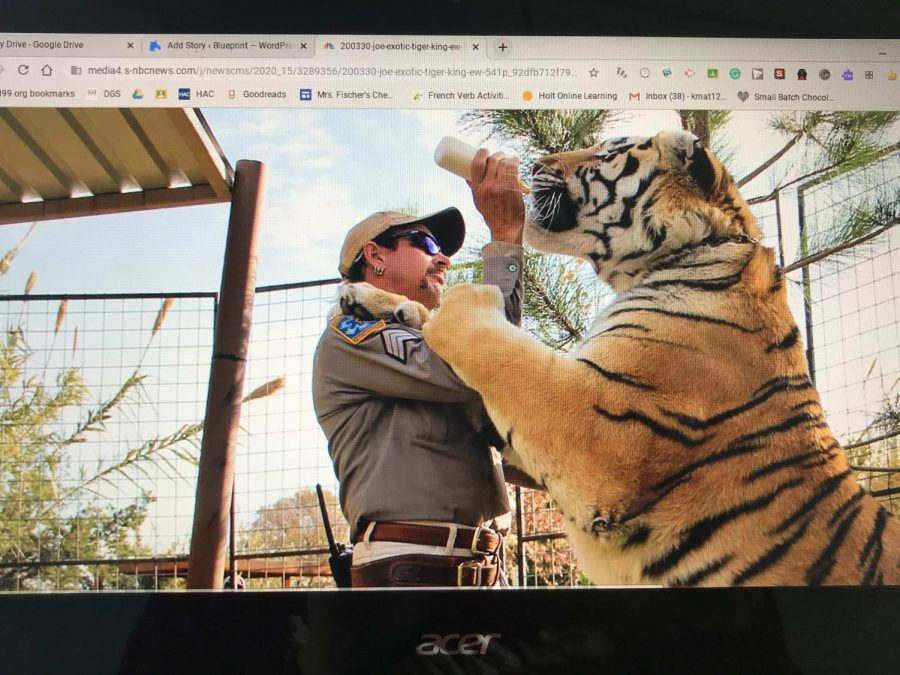 The star of the show, Joe Exotic, seen handling one of his many tigers.