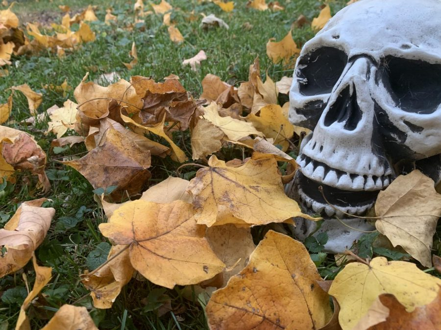 A+spooky+skeleton+from+Halloween+lies+in+some+leaves+for+Fall.+